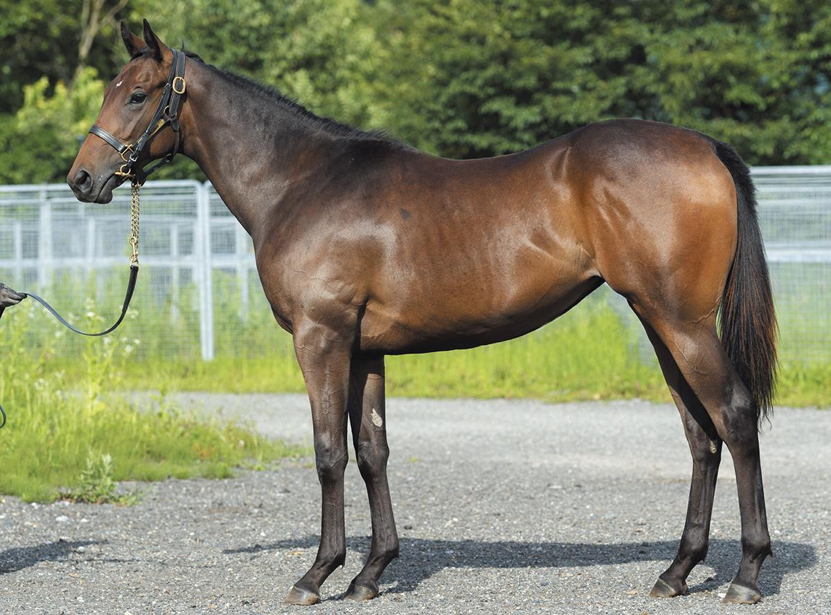 【クイーンキセキの19】(牝)~血統診断-馬場・距離適性-~サラブレッドクラブライオン
